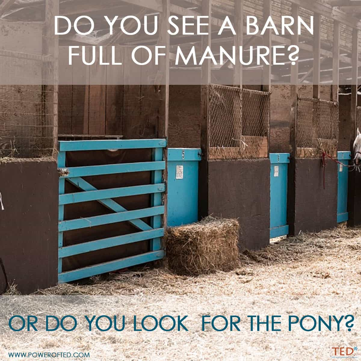 Do you see a barn full of manure or do you look for the pony?