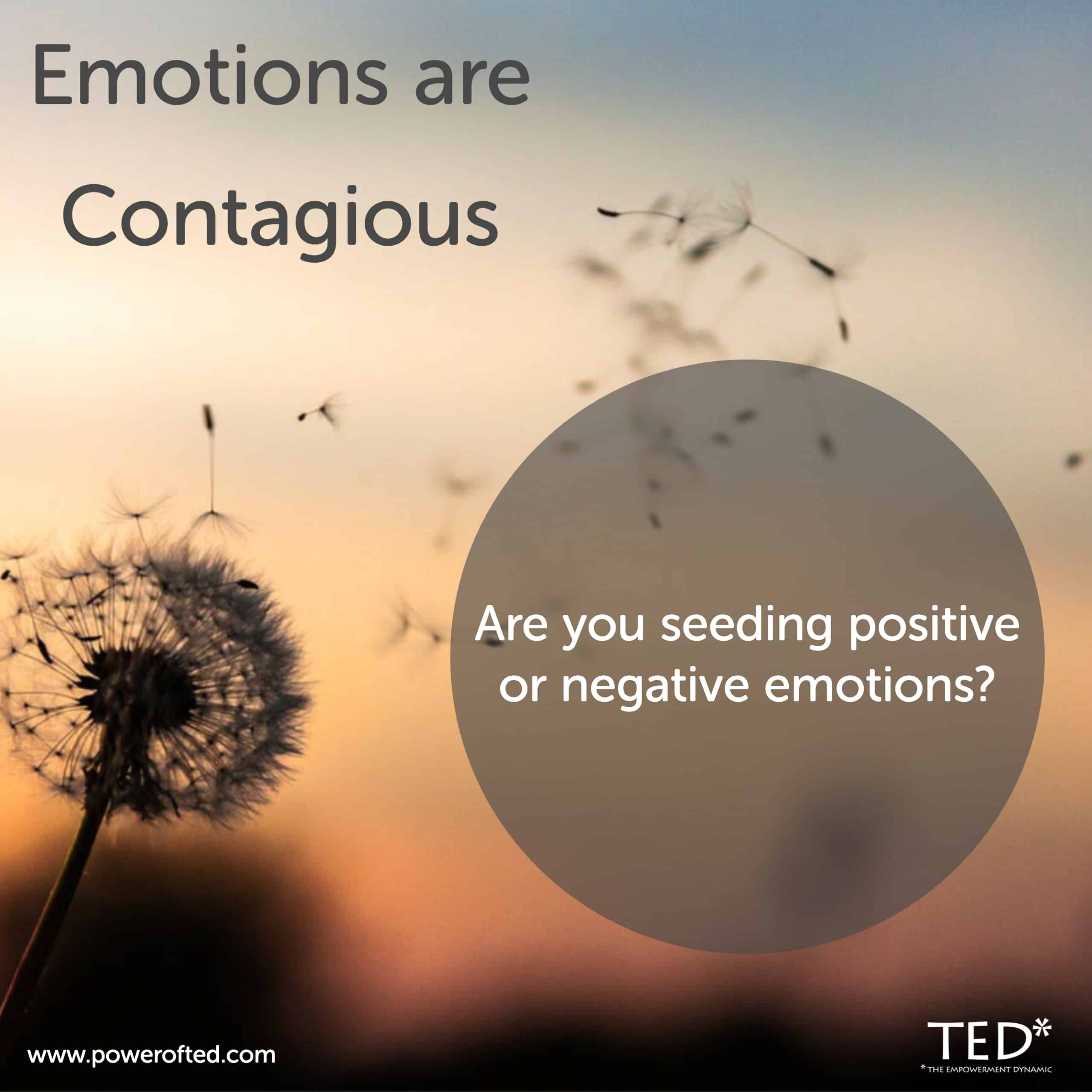 Emotions are contagious. Are you seeding positive or negative emotions?